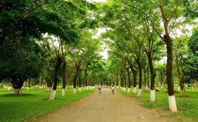 Những hàng cây xanh tại Ecopark