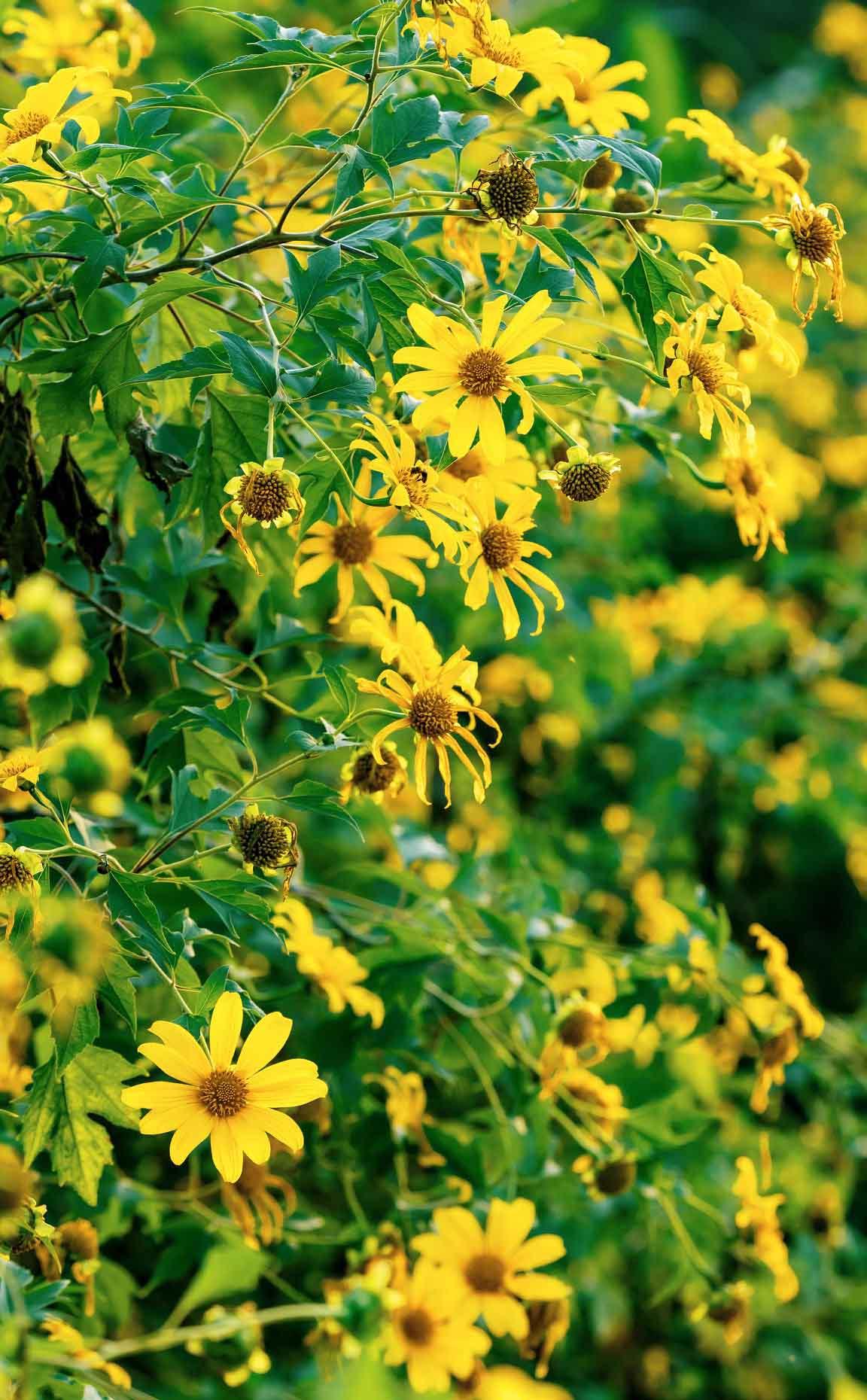 hoa da quy ecopark